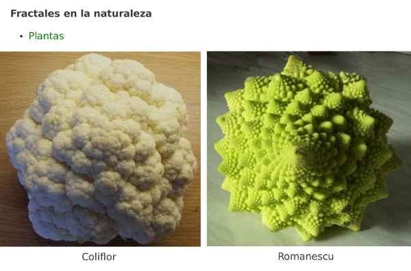 Fractales en la naturaleza